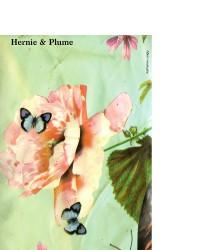 Hernie & Plume